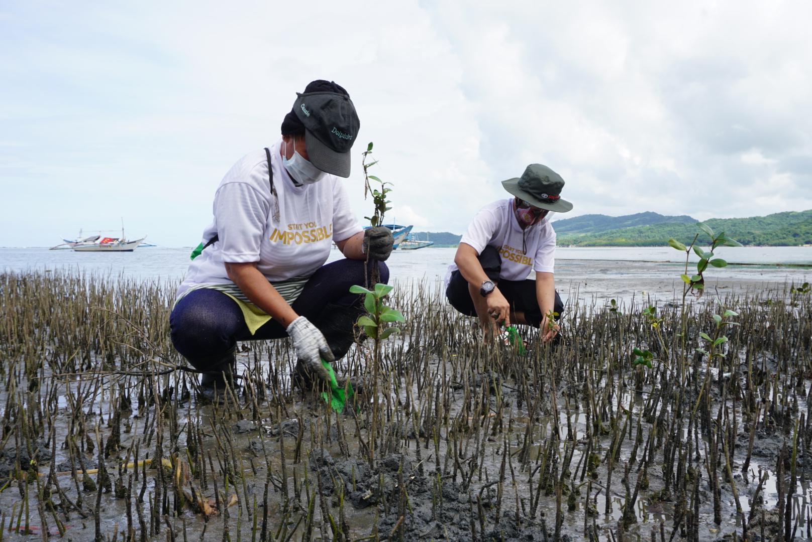 Toyota adopts 10-HA mangrove plantation area in Lian, Batangas.